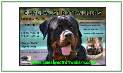 Camelwest Rottweilers